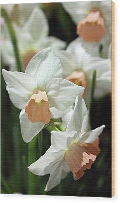 Spring Has Spring Wood Print by Mary Haber