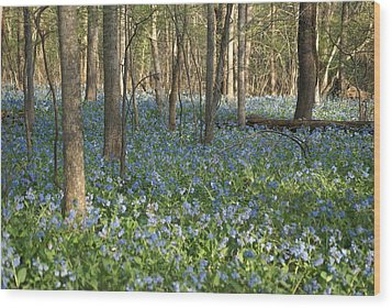 Wood Print featuring the photograph Spring by Heidi Poulin