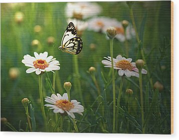 Spring In Air. Wood Print by Photos by Shmelly