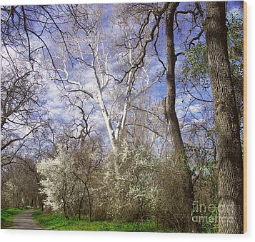 Spring In Bidwell Park Wood Print