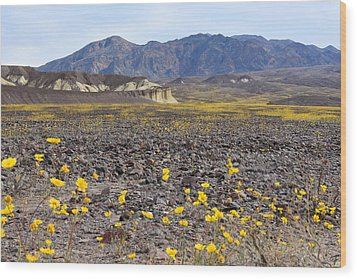 Wood Print featuring the photograph Spring In Death Valley by Dung Ma