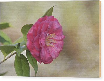 Wood Print featuring the photograph Spring In Savannah by Kim Hojnacki