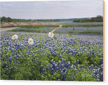 Spring In The Hill Country Wood Print