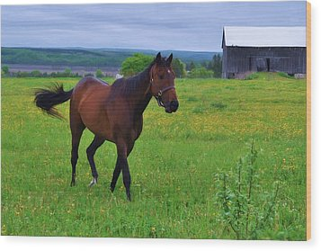 Spring In The Pasture Wood Print by Bill Willemsen