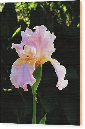 Spring Iris Wood Print by Jeanette Oberholtzer