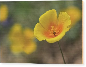 Wood Print featuring the photograph Spring Is Beckoning  by Saija Lehtonen
