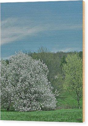 Spring Is Here Wood Print by Debra     Vatalaro