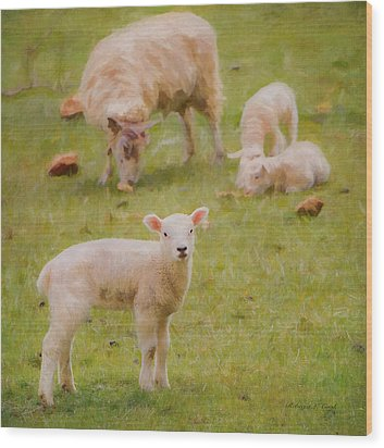 Wood Print featuring the photograph Spring Lamb by Bellesouth Studio