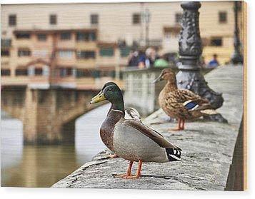 Spring Love Ducks Wood Print