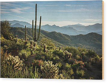 Wood Print featuring the photograph Spring Morning In The Sonoran  by Saija Lehtonen
