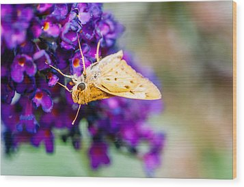Spring Moth Wood Print