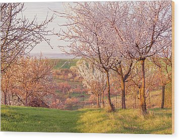 Wood Print featuring the photograph Spring Orchard With Morring Sun by Jenny Rainbow