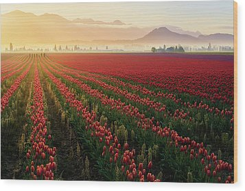 Wood Print featuring the photograph Spring Palette by Ryan Manuel