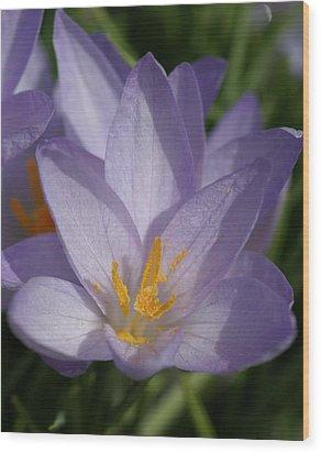 Spring Wood Print by Patricia M Shanahan
