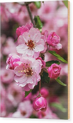 Spring Pink Wood Print by Teri Virbickis