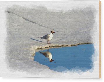 Spring Reflections Wood Print by Torfinn Johannessen