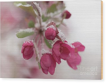 Wood Print featuring the photograph Spring Snow by Ana V Ramirez