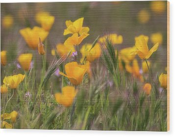 Wood Print featuring the photograph Spring Softly Calling  by Saija Lehtonen