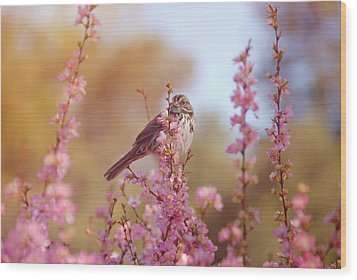 Spring Sparrow Wood Print by Lynn Bauer