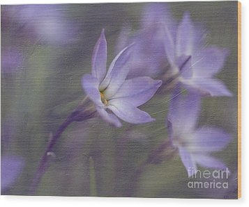 Spring Starflower Wood Print