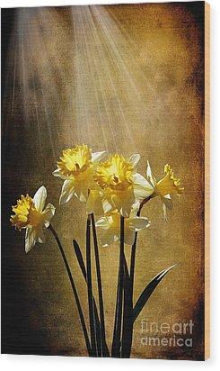 Spring Sun Wood Print by Lois Bryan