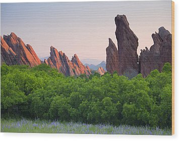 Spring Sunrise At Roxborough Wood Print by Morris  McClung