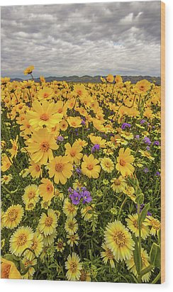 Wood Print featuring the photograph Spring Super Bloom by Peter Tellone