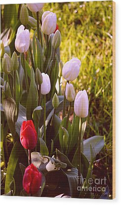Wood Print featuring the photograph Spring Time Tulips by Susanne Van Hulst