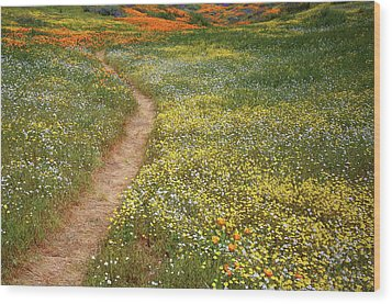Wood Print featuring the photograph Spring Trail Through A Sea Of Wildflowers At Diamond Lake In California by Jetson Nguyen