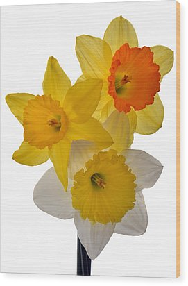 Spring Trio Wood Print by Terence Davis