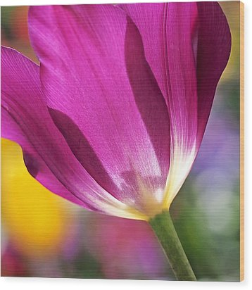 Wood Print featuring the photograph Spring Tulip by Rona Black