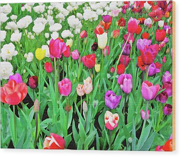 Spring Tulips Flower Field I Wood Print by Artecco Fine Art Photography