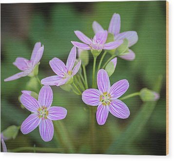 Wood Print featuring the photograph Spring Vibe by Bill Pevlor