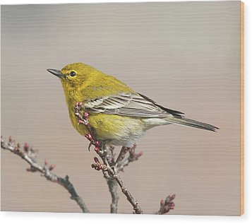 Wood Print featuring the photograph Spring Warbler 1 2017 by Lara Ellis
