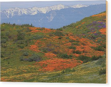 Wood Print featuring the photograph Spring Wildflower Display At Diamond Lake In California by Jetson Nguyen