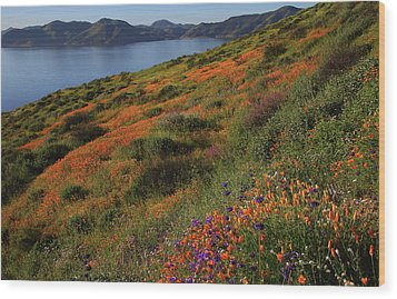 Wood Print featuring the photograph Spring Wildflower Season At Diamond Lake In California by Jetson Nguyen
