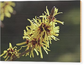 Wood Print featuring the photograph Spring by Wilhelm Hufnagl