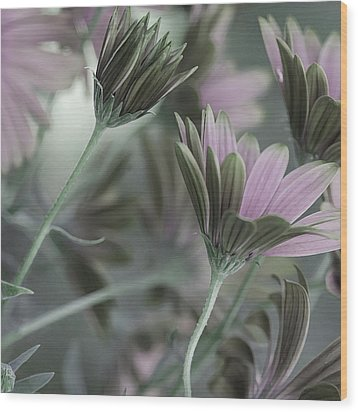 Spring's Glory Wood Print