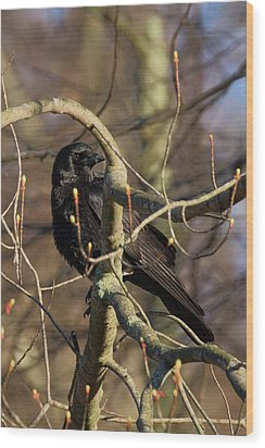 Wood Print featuring the photograph Springtime Crow by Bill Wakeley