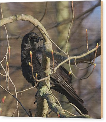 Wood Print featuring the photograph Springtime Crow Square by Bill Wakeley