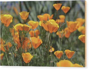 Wood Print featuring the photograph Springtime  Super Bloom In California by Cliff Wassmann