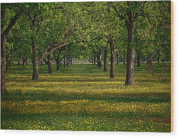 Springtime Through The Pecan Trees Wood Print by Renee Hardison