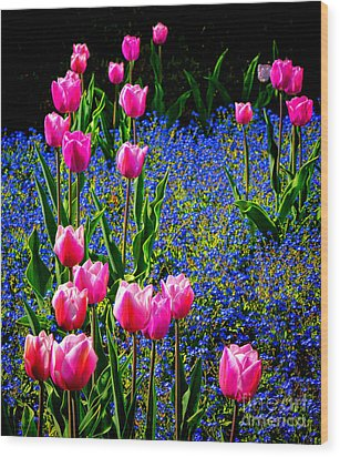 Springtime Tulips Wood Print by Olivier Le Queinec