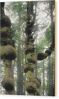 Spruce Burl Olympic National Park Beach 1 Wa Wood Print by Christine Till