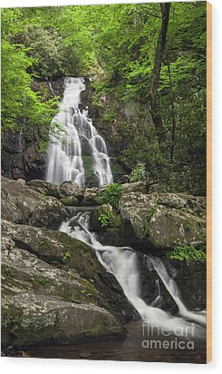 Wood Print featuring the photograph Spruce Flats Falls - D009919 by Daniel Dempster
