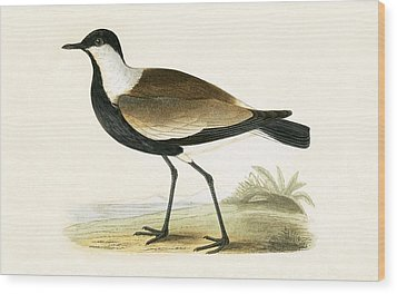 Spur Winged Plover Wood Print by English School