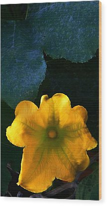 Wood Print featuring the photograph Squash Blossom by Lenore Senior