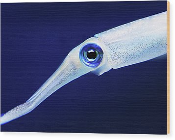 Wood Print featuring the photograph Squid by Anthony Jones
