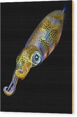 Squid At Night Wood Print by Rico Besserdich
