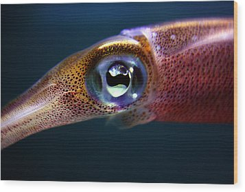 Squid Eye Wood Print